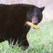 A Toca do Urso